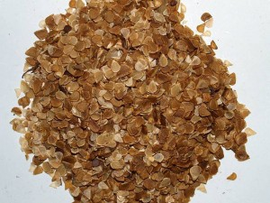 Lilium martagon - mix of 4 varieties