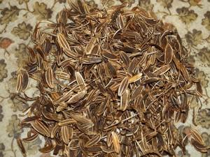 Lomatium nudicaule / Pestle Root
