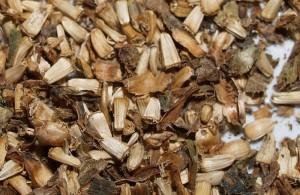 Cichorium intybus (perennial wild)
