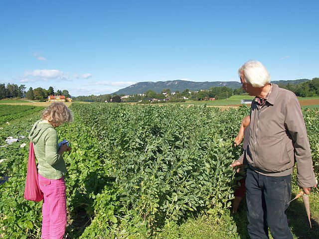 Rita Amundsen​ and Tom Harald in front of the Broad Beans!
