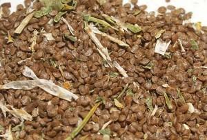 Barbarea vulgaris variegata