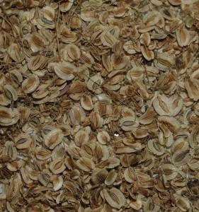 """Peucedanum ostruthium """"Daphnis"""" (variegated)"""