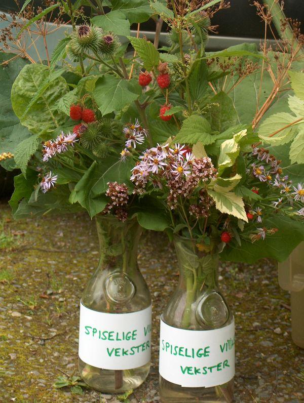Edible wild plants