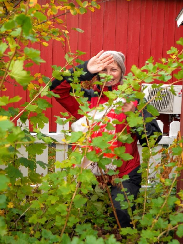 A PDC'er picks Worcesterberries