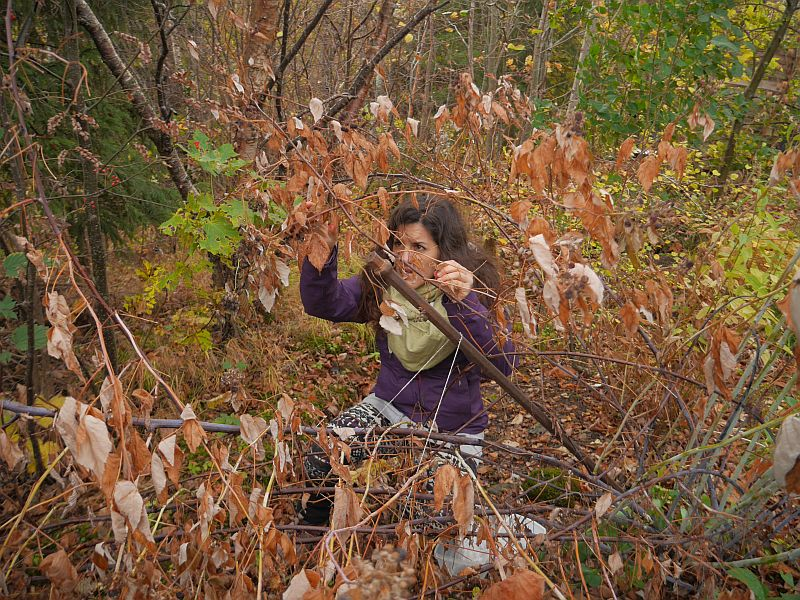 ..and yet another PDC'er picking Aronia melanocarpa