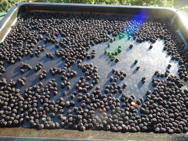 ...and dried Aronia berries!