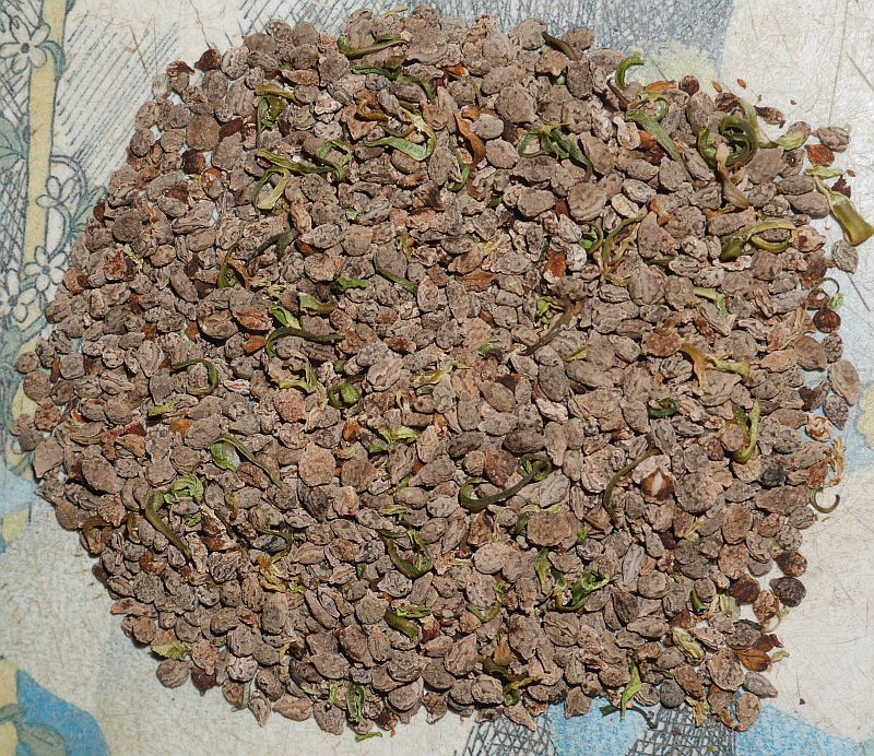 "Seed of ""invasive"" Himalayan Balsam / Kjempespringfrø (Impatiens glandulifera) will be used on winter baked dishes!"