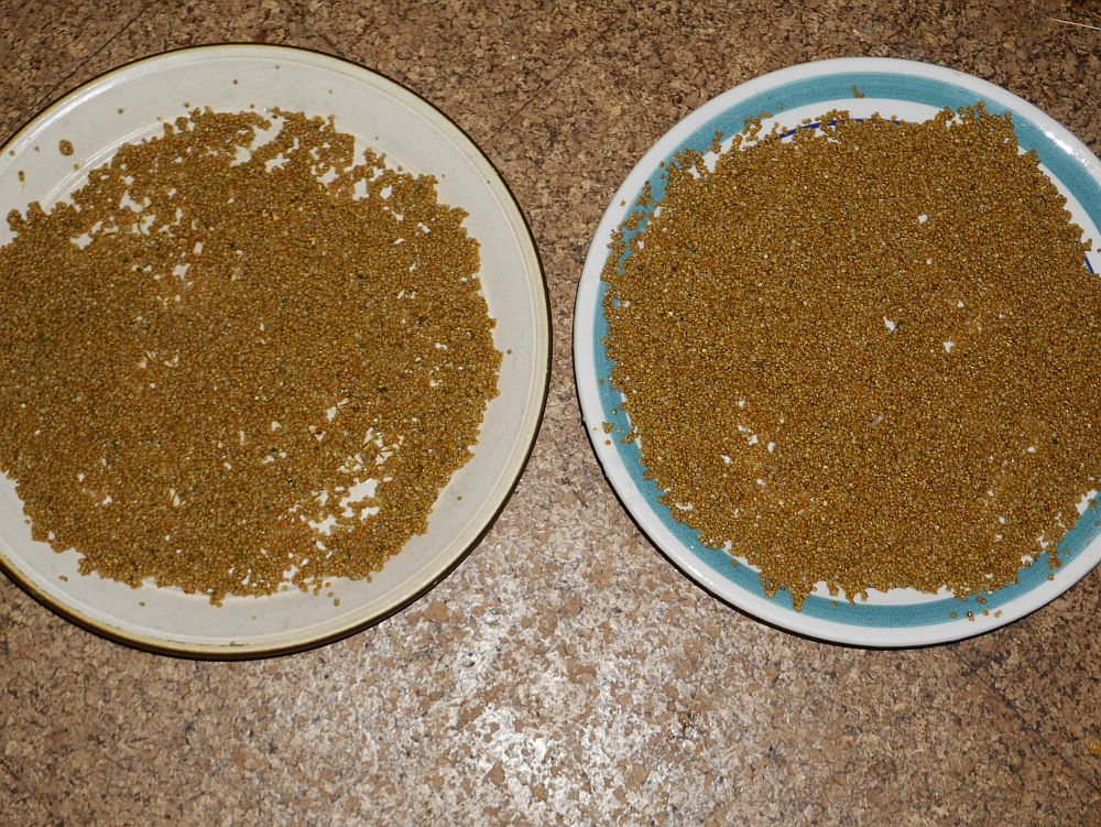 Good quinoa seed sinks in water whereas the chaff floats, an easy way to clean the seed, just dry the seed quickly afterwards