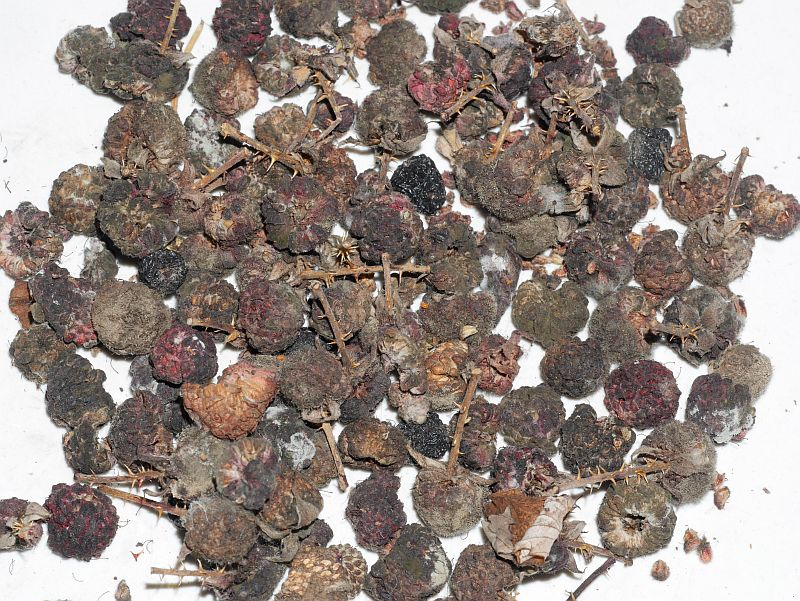 "081117:  Rubus occidentalis ""Black Hawk"" (Black raspberry / svartbringebær)"