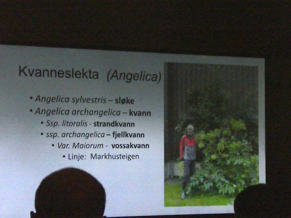 Dette bildet viser Ingerids mann og en kvannplante i hagen