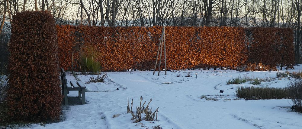 111217: Beech hedge around the Renaissance garden
