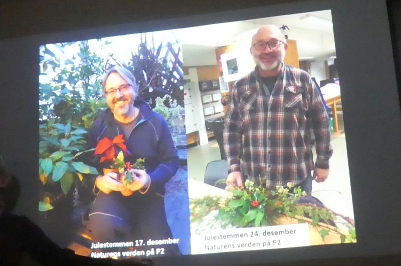 For Norwegians, you might like to listen in to radio program Naturens verden who are talking about Xmas plants last and next Sunday...
