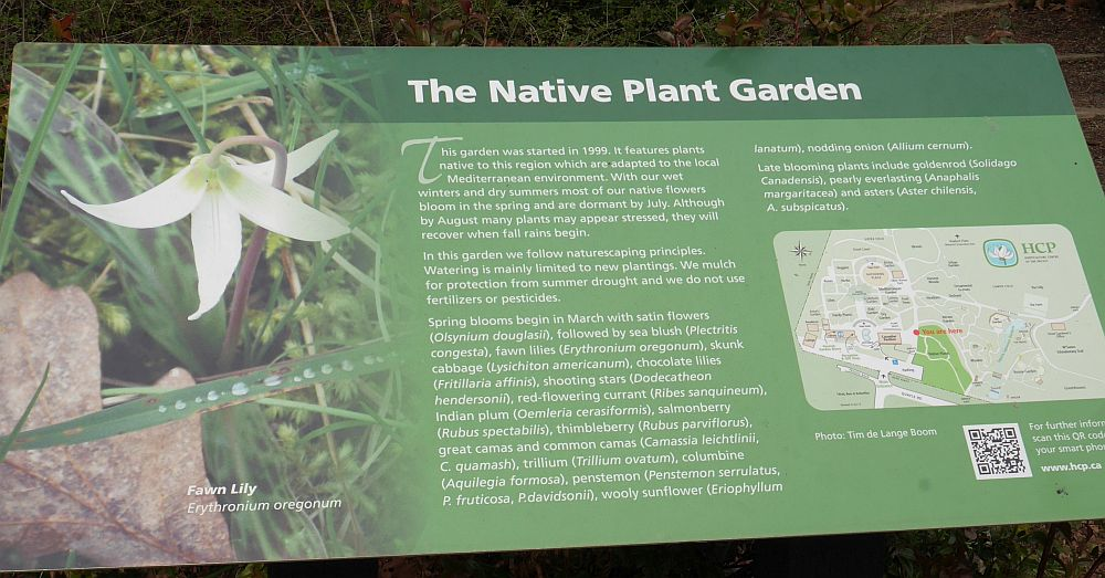The native plant garden!