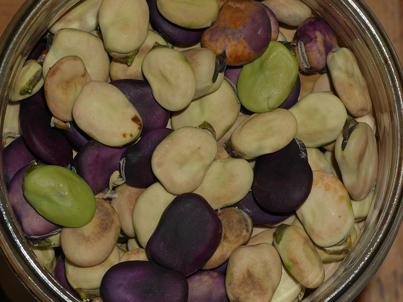 road bean diversity