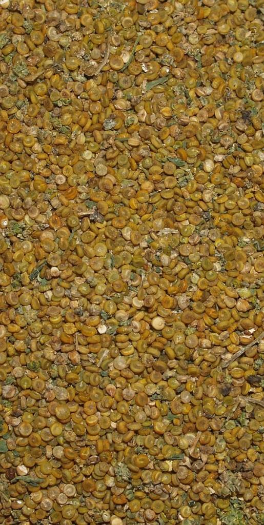"Quinoa ""Stephe"" seed"
