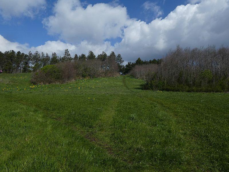 Camas meadows
