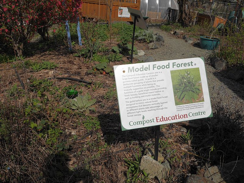 The whole area is designed as a Permaculture Food Forest