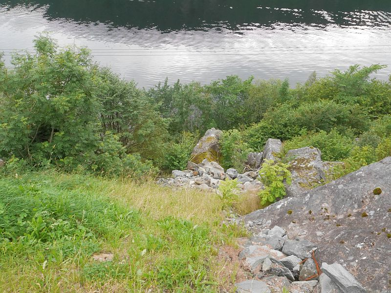 Part of the food forest is located below the house on the steep slope from the road to the fjord!