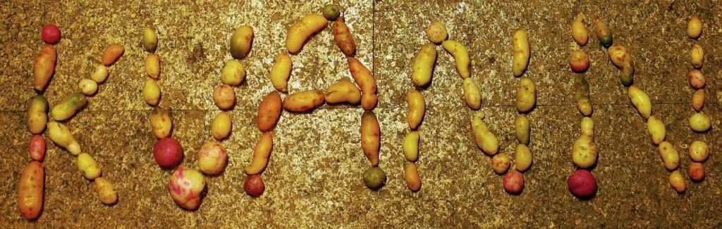 Norwegian Seed Savers (KVANN) spelled with Ulluco tubers!