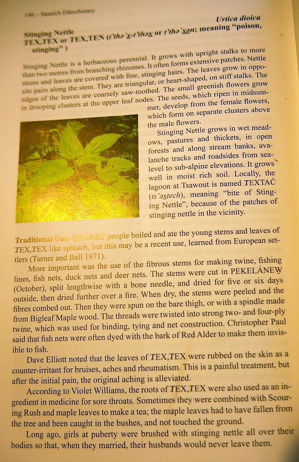 "...and also the book ""Saanich Ethnobotany""  which she co-authored with Richard Hebda...here one of the pages about stinging nettle, which Ashley tells about in one of the videos!"