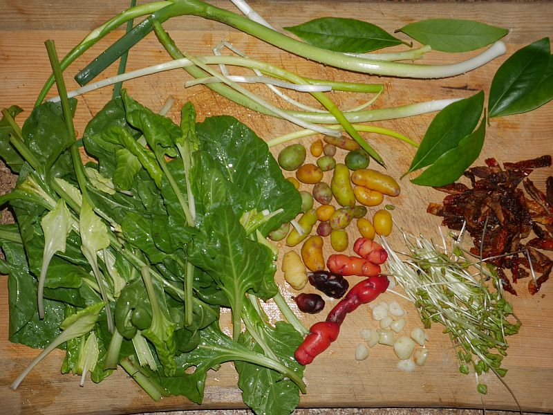 Swiss chard from the cellar (the light coloured leaves have started to grow in the dark), ocas, ullucos, Allium fistulosum, leek, dried tomato, garlic, bay leaves and buckwheat shoots