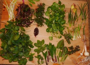 Garden harvested perennial veggies (apart from horseradish at top right, blanched inside for the delicious shoots)
