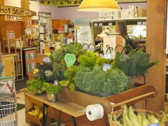 P1120392 -- <p>