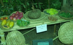 943424 10151584193550860 1222549145 n -- <p> Konjac at the Eden project</p>