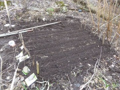 P1000254 -- <p> Sowing carrots a month ahead of normal and parsnips that I didn&#39;t get around to in the autumn. No frost in the soil in most of the garden</p>