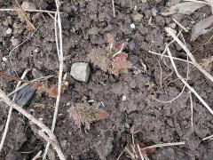-- Fennel /Fennikel  isn't easy to overwinter this far north! Bronze fennel.