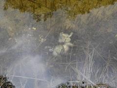 -- Dead toad /padde :(