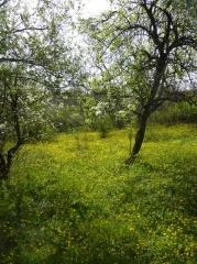 P1030508 -- Orchard