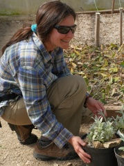 P1390318 -- Kathcul Garden nursery - Maria and Sideritis syriaca!
