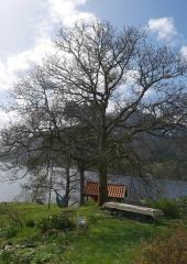 """P1400276 -- The """"tuntre"""" in Vidar-Rune Synnevåg's garden is an oak"""
