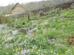 P1400560 -- Alvastien Telste's Forest Garden
