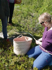 Making a seljefløyte /willow flute