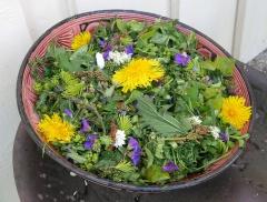 Steigen wild salad! -- Steigen wild salad!