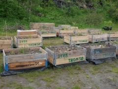 Dyrk Tromsø