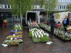 Skulgam Gartneri -- I visited this interesting nursery on the market