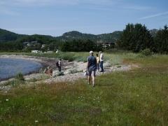 Approaching the Sea Kale / Strandkål beach