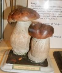 Model ceps -- Porcelain fungi models - Ceps / Steinsopp