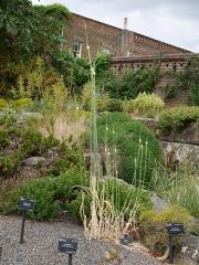 Allium commutatum -- Allium commutatum