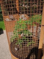 Imprisoned hemp -- Industrial fiber hemp under strong guard ;)
