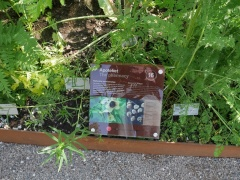 Medicinal herbs #2