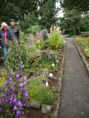 Campanulaceae bed -- Campanulas are great productive and ornamental plants for the cold garden