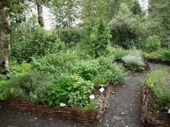 The herb garden -- The herb garden