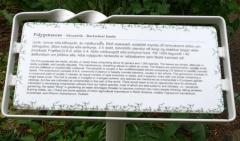 Polygonaceae sign -- Polygonaceae sign