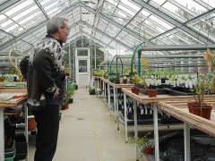 In the propagation greenhouse -- In the propagation greenhouse