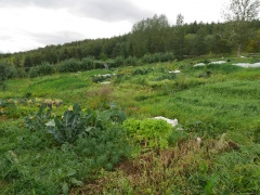 Gamla-Gróðrarstöðin (the old nursery) and community garden -- Gamla-Gróðrarstöðin (the old nursery) and community garden