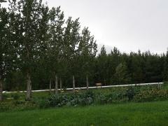 Gamla-Gróðrarstöðin (the old nursery)  -- Gamla-Gróðrarstöðin (the old nursery) produces trees.